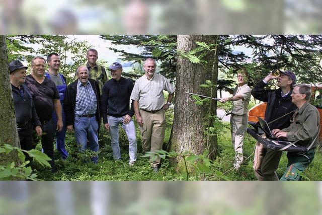 Wie der Wert des Waldes ermittelt wird
