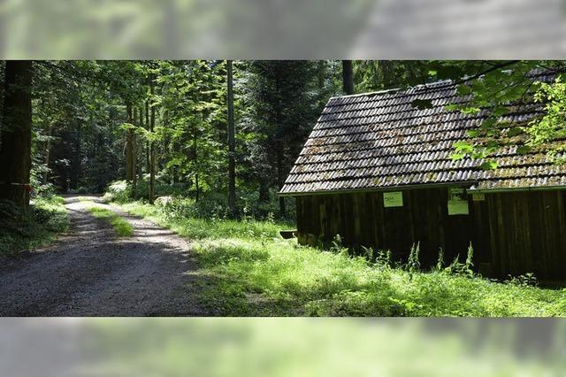 Am Erzbuck bei Ottoschwanden entsteht ein Bestattungswald