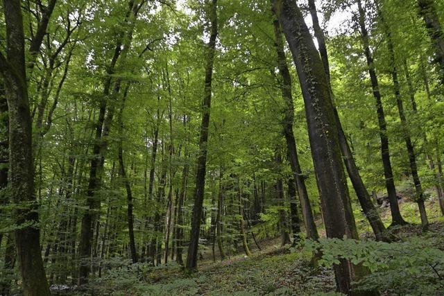 Der Degerfelder Wald wird aufgemöbelt