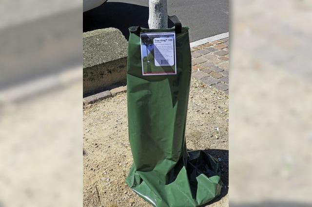 Wasser aus grünen Säcken: Neues Bewässerungssystem für junge Bäume in Müllheim
