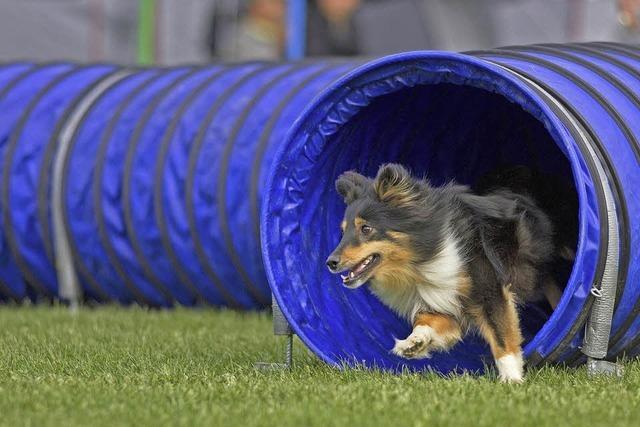 Hundesportwettkämpfe in Emmendingen