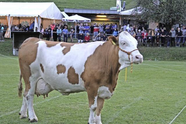 Die Kuh konnte nicht