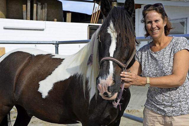 Drei Pferde suchen ein neues Zuhause