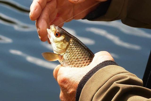 Peta zeigt Königsfischer in Ichenheim an