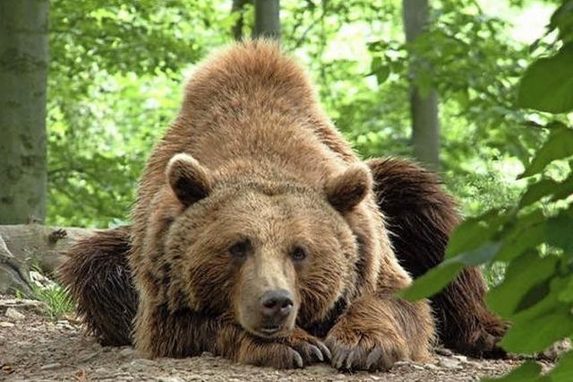 Bärenpark ist ein Besuchermagnet