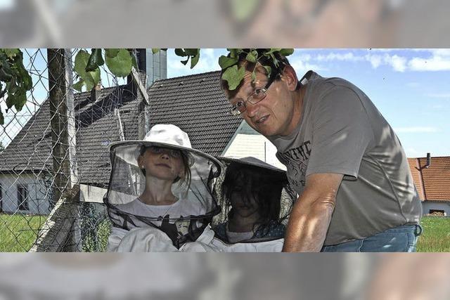 Bienen bei der Arbeit zugeschaut