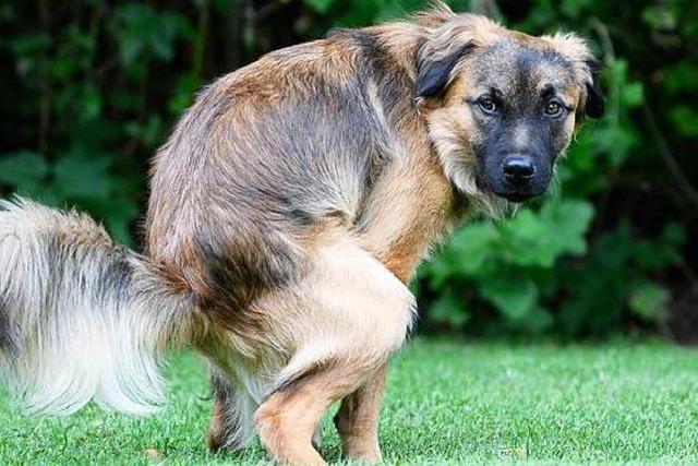 Tierärzte und Verwaltung starten Aktion gegen Hundekot-Plage