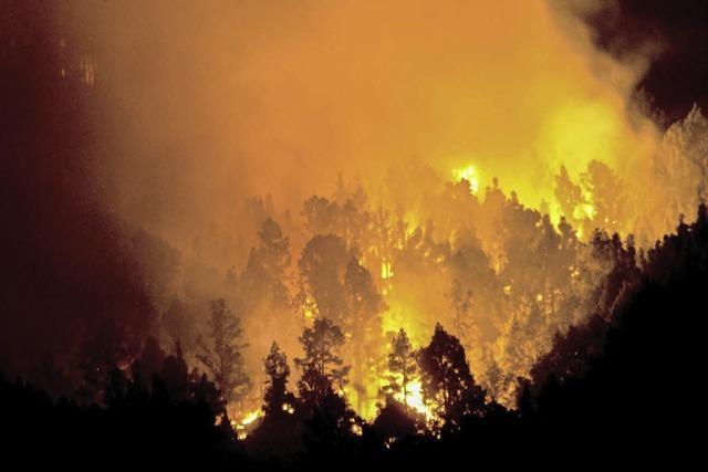 Feuer auf La Palma vernichtet 4000 Hektar Wald