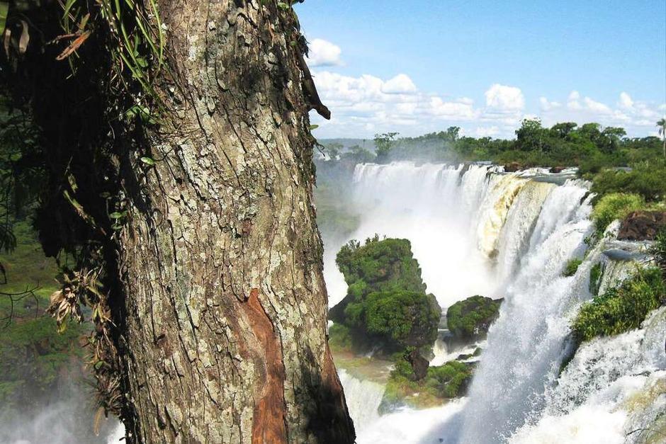 Karl-Heinz Wiederhold: Die Aufnahme entstand während unser Ferien an den Wasserfällen des Iguasu in Argentinen. Zu beachten ist die Eidechse im Vordergrund am Baumstamm. (Foto: Karl-Heinz Wiederhold)