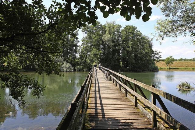 Rheinidylle