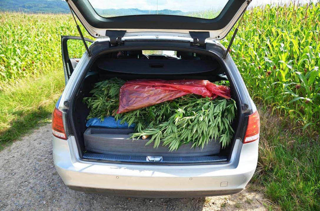 Am Ende des Tages ist der Kofferraum voll mit Cannabispflanzen.    Foto: Sebastian Wolfrum