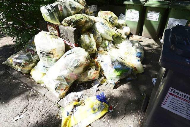 Falsch gefüllte gelbe Säcke locken Ratten in Weingarten an