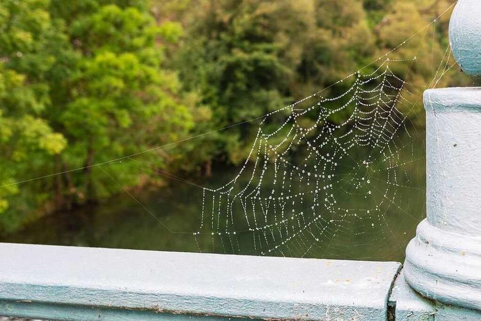Franz Wieber: Spinnennetz an einem Brückengeländer. (Foto: Franz  Wieber)