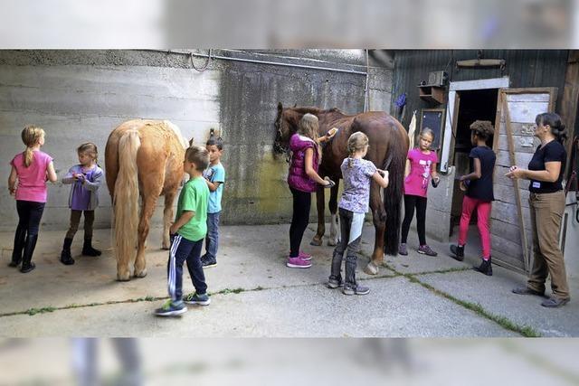 Vom richtigen Umgang mit Pferden