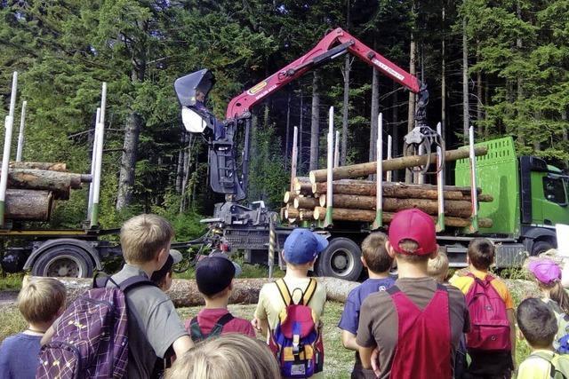 Vom Baumfällen bis zum Abtransport des Stammes