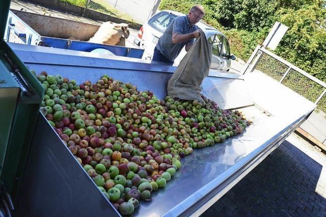 Der Fruchtsaftbetrieb Meier aus Sulz jagt Äpfel von Privatleuten durch die Presse