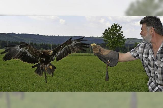 Franz Ruchlak präsentiert seine Greifvögel in Höchenschwand