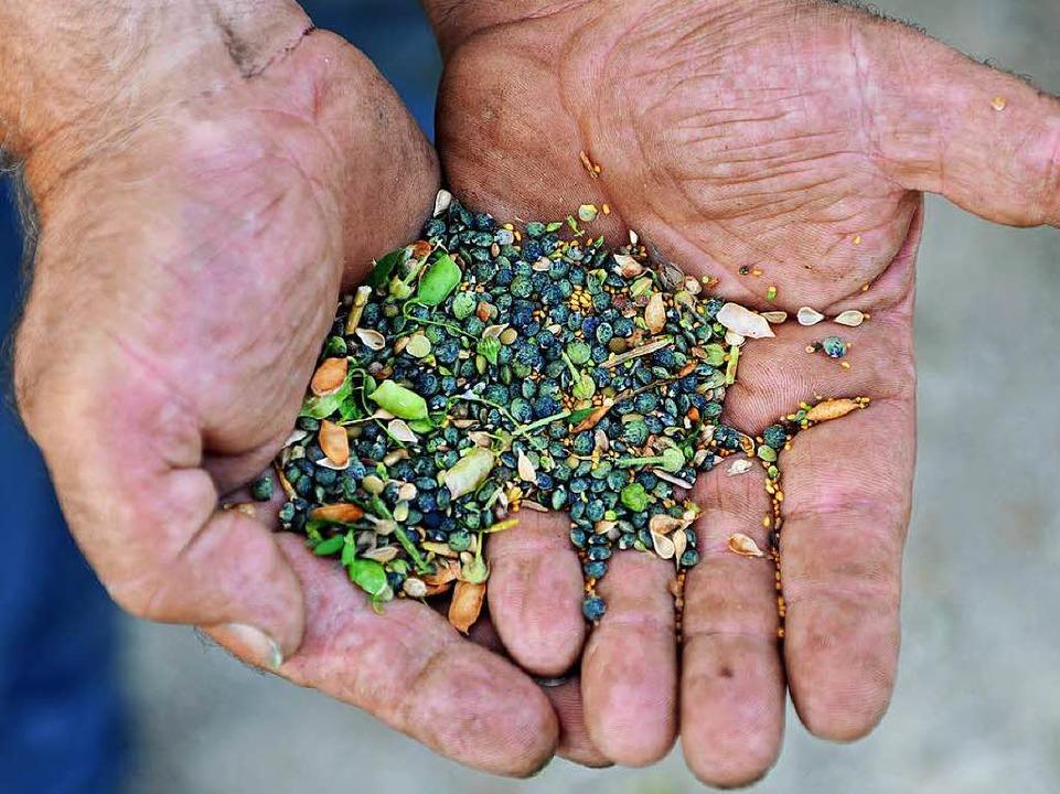 Knackig sind die kleinen grünlichen Le-Puy Linsen.  | Foto: Wolfgang Scheu