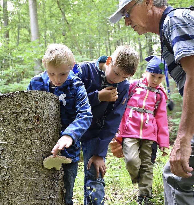 Die Kinder lernten den Rotrandigen Bau...en auch Deutschlandpilz genannt wird.   | Foto: Sebastian Köhli