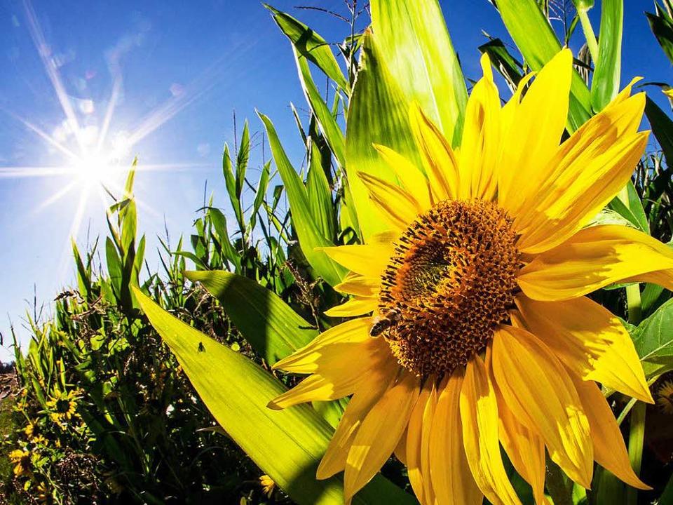 Sonne am Stück: Ende August – und es ist Sommer.  | Foto: dpa