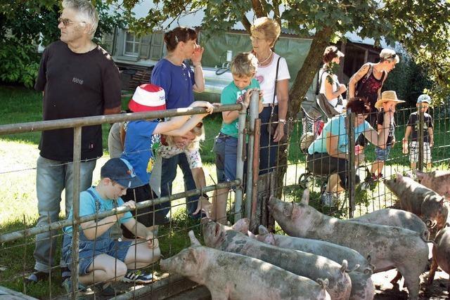 Wo sich die Schweine sauwohl fühlen