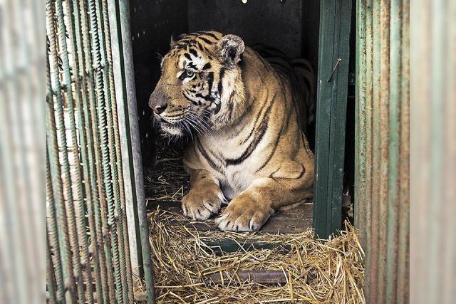Zoo Chan Junis galt als der schlimmste der Welt