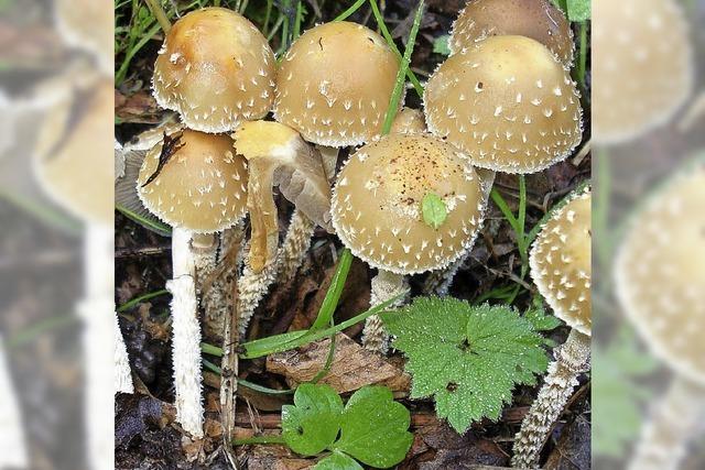 Tipps und Infos rund um Pilze