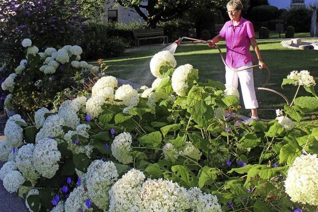 Eine Arbeit, die prächtige Blüten treibt