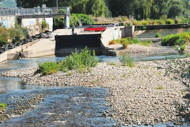Clinch : Lachse blockieren Wasserkraftwerk an der Kinzig