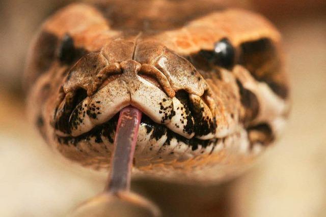Peta erstattet Strafanzeige gegen Reptiliengroßhändler