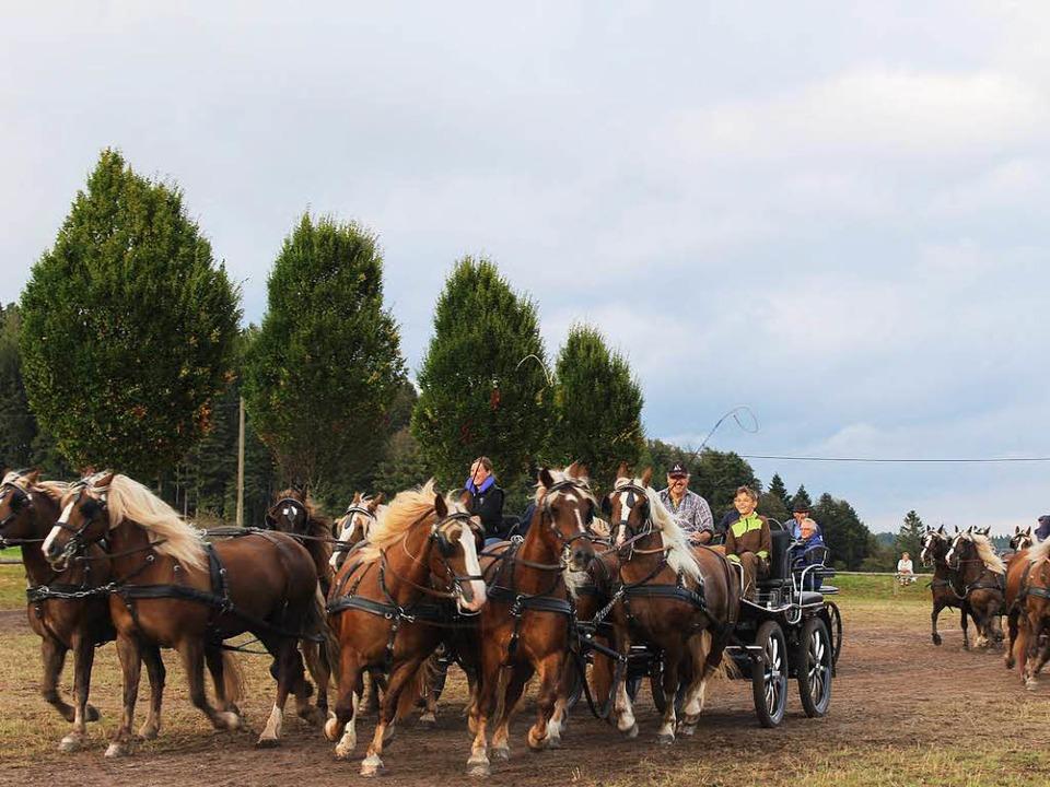 Die Vier- und Zweispänner der Pferdezu...ärgen für die Vorführungen am Samstag.  | Foto: Erich Krieger