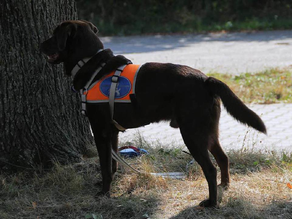 Die Blindenführhunde mussten – merklich nervös – zuschauen.  | Foto: Konstantin Görlich