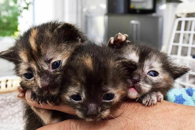 Drei Katzenbabys überleben Fahrt von Frankfurt nach Freiburg im Radkasten eines BMW