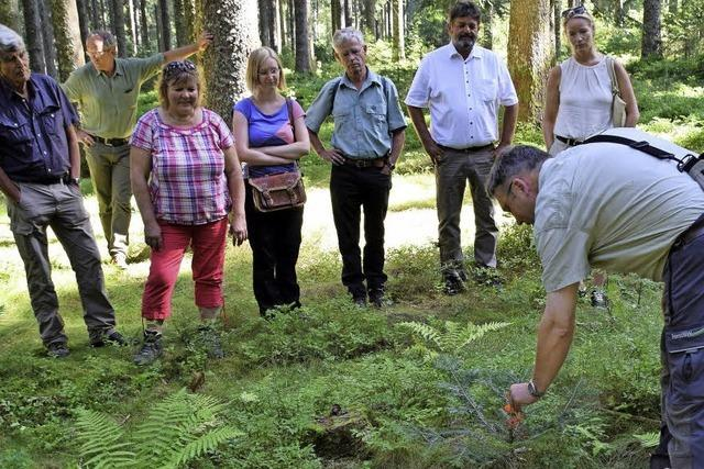 Das Interesse am Wald ist vielfältig