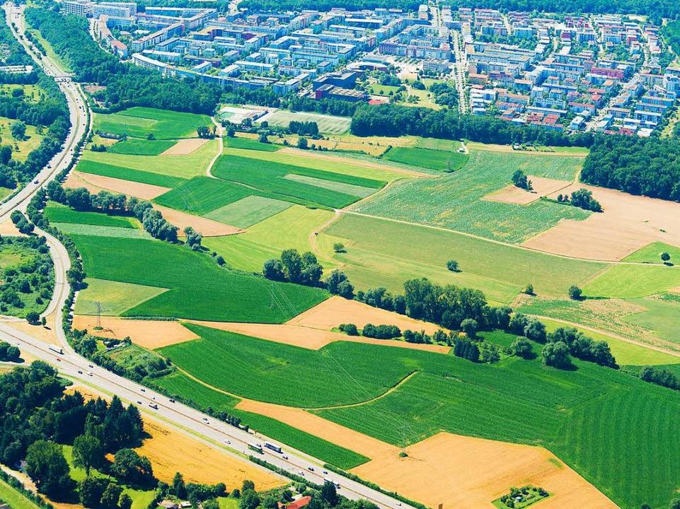 Neben dem Rieselfeld soll ein komplett neuer Stadtteil entstehen.  | Foto: Nils Theurer