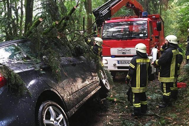 Baum stürzt im Wald auf ein Auto – Fahrer befreit sich