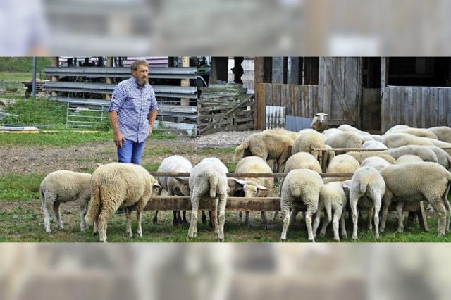 20 Prozent regionales Lammfleisch