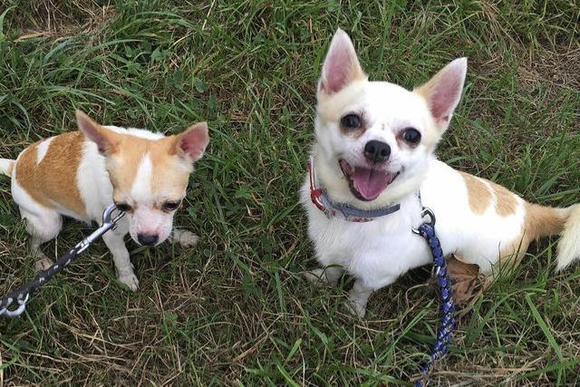 Verwahrloste Hunde gerettet