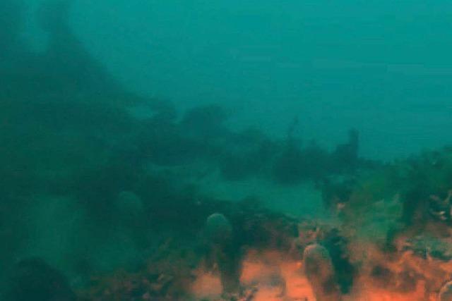 Expeditionsschiff nach 170 Jahren im Meer entdeckt