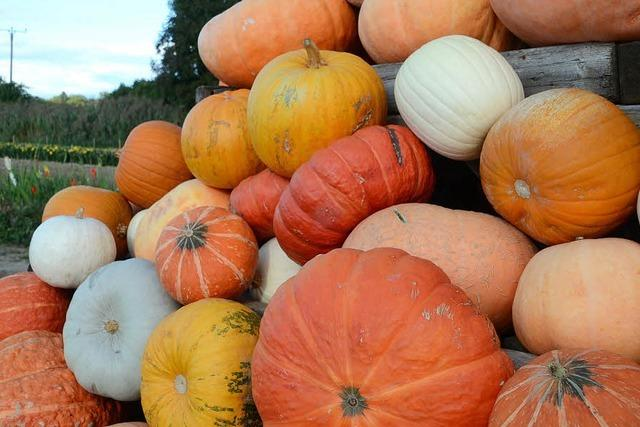 Herbstliche Vielfalt