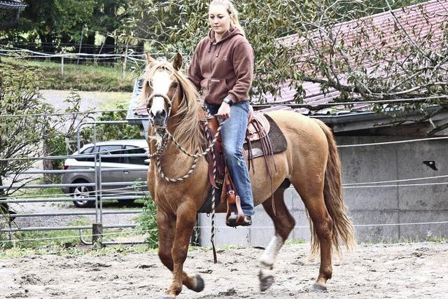 Die Zucht südamerikanische Pferde auf einem Schwarzwaldhof