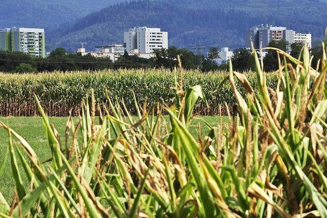 Wird der neue Stadtteil Dietenbach komplett klimaneutral?