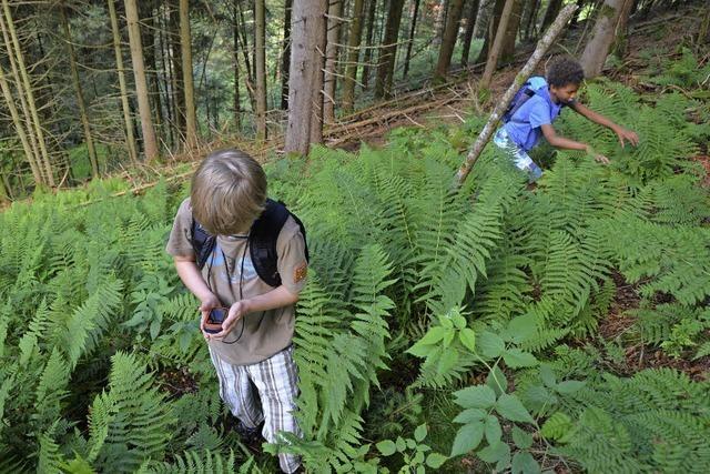 Münstertal: Geocaching durch die Wildnis