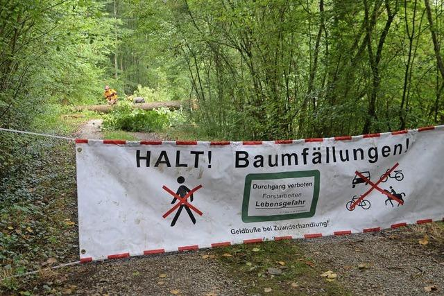 Fällarbeiten im Wyhler Wald wegen Pilzes