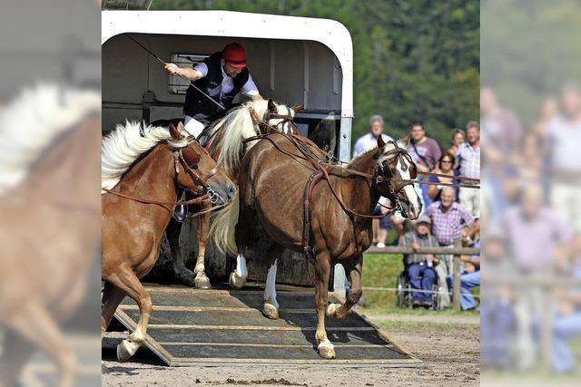 Platz für mehr Pferde