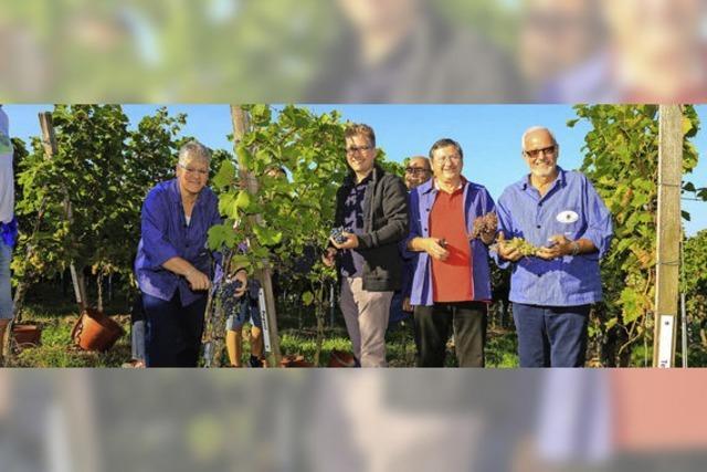 Bürgermeister-Weinlese im Rebsortengarten