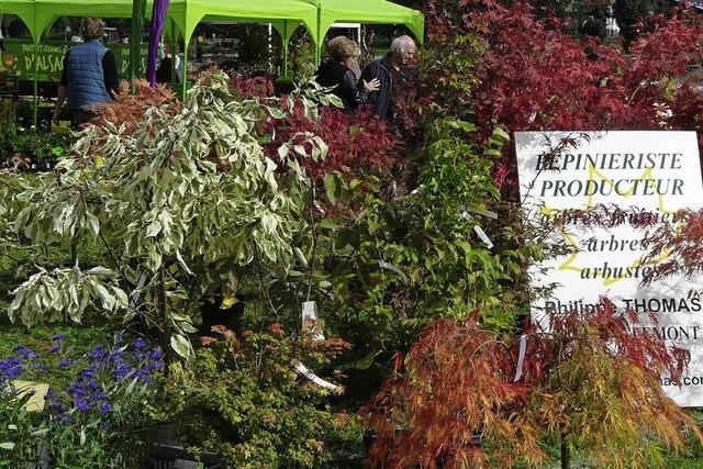 Pflanzenmarkt auf der französischen Rheinseite