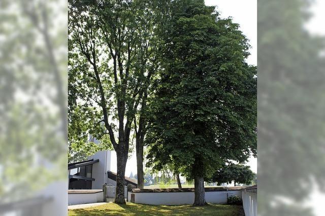 Dittishausen will einen Friedbaum