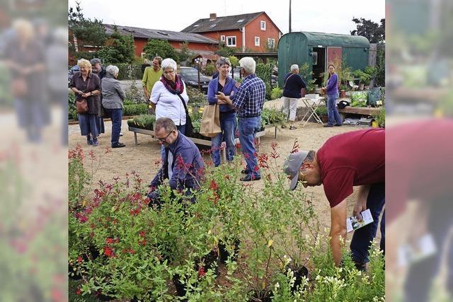 Gärtner Frank Fischer eröffnet in Umkirch einen vielfältigen Salbeigarten