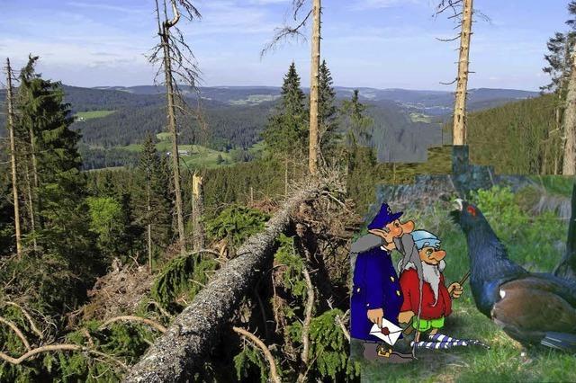 Ahornbäume für Anton Auerhahn